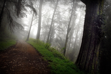 A Misty Trail in Color