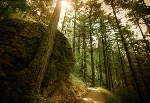Path to Wahkeena (Antique)