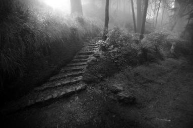 Davidson Steps in Perspecitve