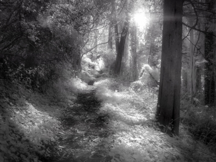 Hazy Path (Infrared)