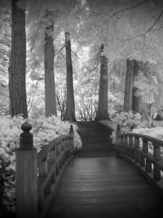 Japanese Garden Bridge (Infrared)