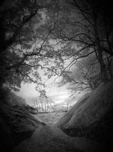 Mystery Path (Digital Infrared)