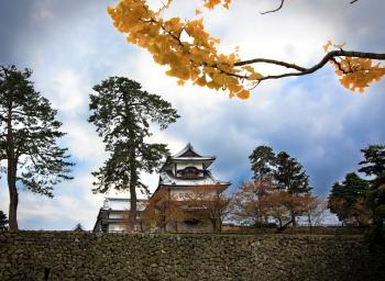 Yellow Branch at Kanazawa