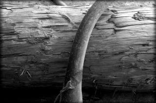 Log & Kelp