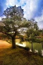 Kenrokuen Tree