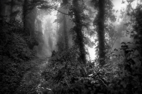 Misty Forest #2