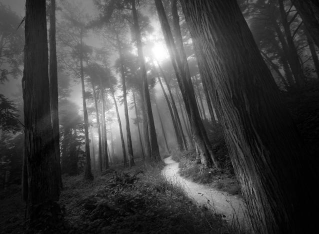 Presidio Path (B&W)