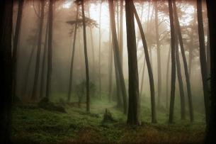 Presidio Tree Mist