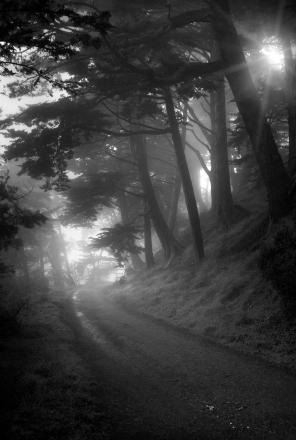 Misty Morning Walk