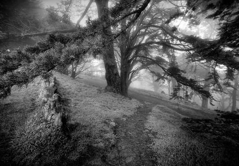 Strawberry Hill Trees