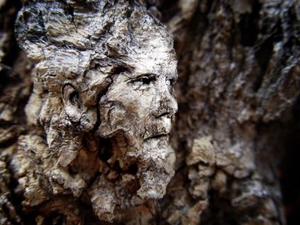 Bark Face