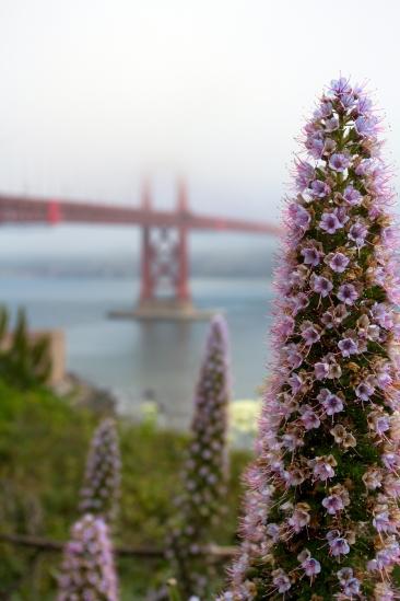 Golden Gate View #7
