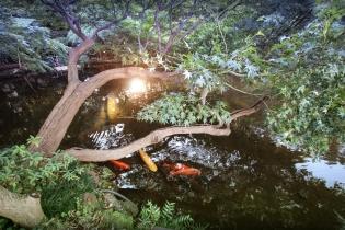 Koi Pond at New Otani